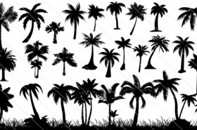 Palm Tree Silhouette Vector (30)
