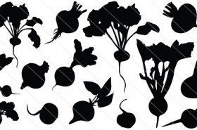 Beetroot Silhouette Vector (14)