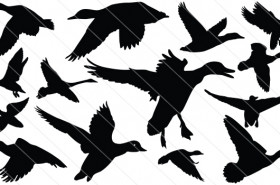 Duck Flying Silhouette Vector (13)