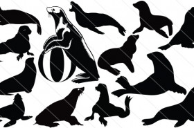 Seal Silhouette Vector (13)