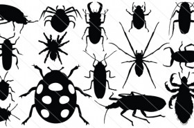 Bug Silhouette Vector (15)