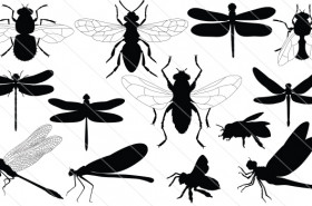 Dragonfly & Honey Silhouette Vector (13)