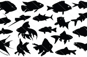 Fish Silhouette Vector Graphics