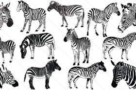 Zebra Vector Graphics Silhouette