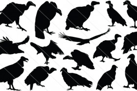 Vulture Silhouette Vector Graphics