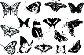 Butterfly Silhouette Vector (15)