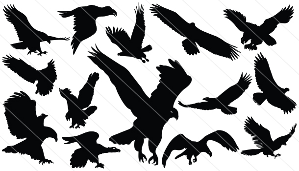 Flying-Eagle Silhouette Vector (14)