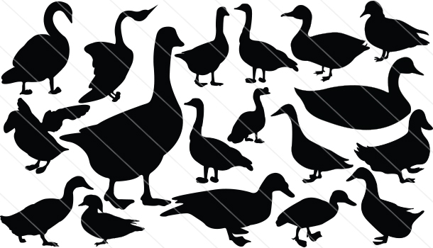 Duck Silhouette  Vector (18)