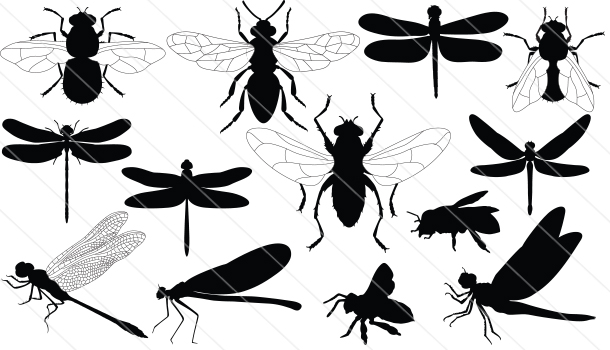 Dragonfly &Honey Silhouette Vector (13)