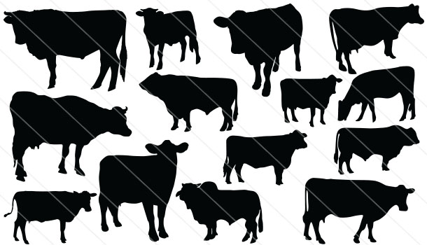 Cattle Silhouette Vector (14)