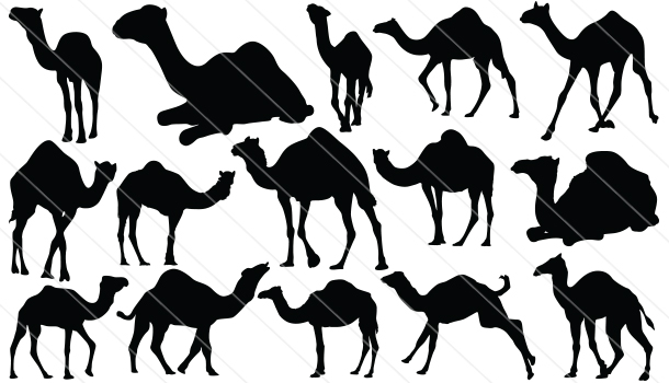Camel Silhouette Vector Graphics