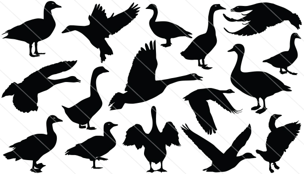 Goose Silhouette Vector Graphics
